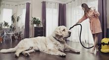 Съвети за чист дом с домашни любимци