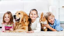 Първа помощ при домашни любимци